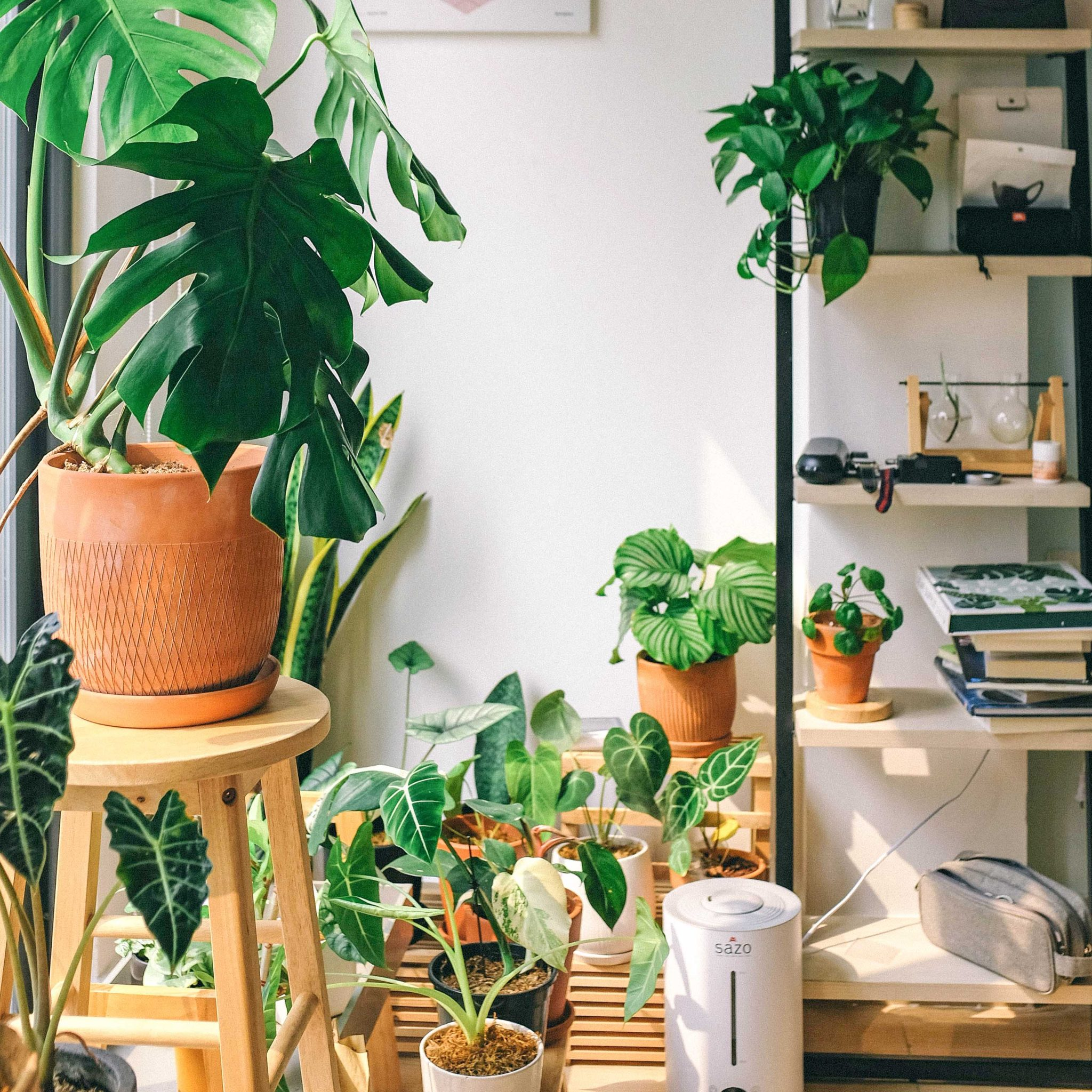 What do Indoor Plants and Marketing Campaigns have in Common?