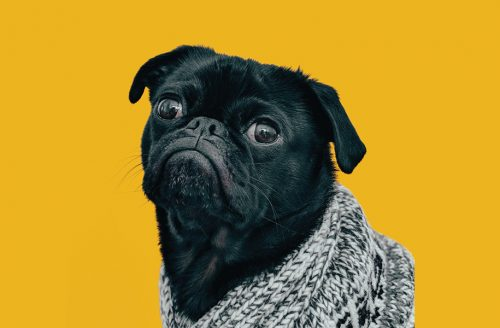dog-pic